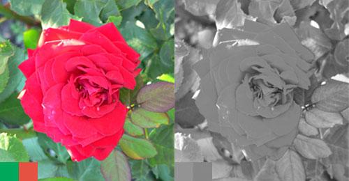 Из цветного в черно-белое
